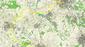 Karte4