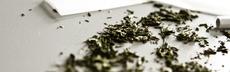 Cannabis medizin joint bauen paul krause