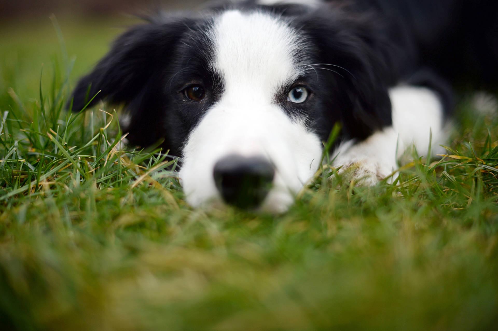 Kastration Beim Hund Sinnvoll Oder Gefährlich Wdrde